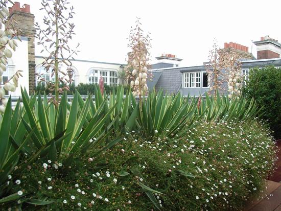 Pots and planters mark lutyens landscape architect