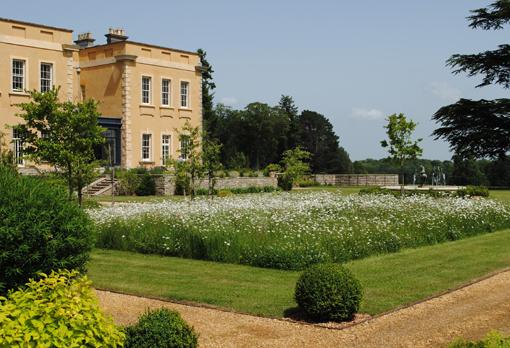 Clarendon Park daisy lawn copy