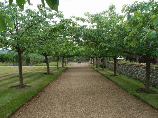 cowdray sussex cherry tree avenue