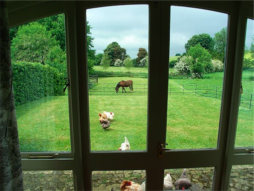 view over garden and animals grazing