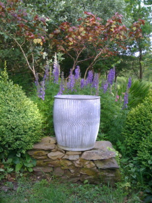 Slade Farm. galvanised planter cercis