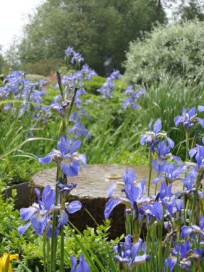 A millstone fountain surrounded by blue iris