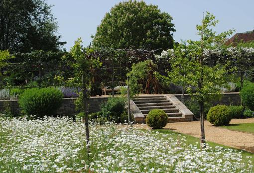 Clarendon Park bosquet daisies