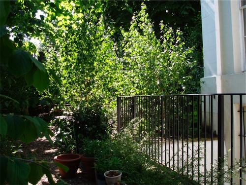 St John's Wood garden planting with railings