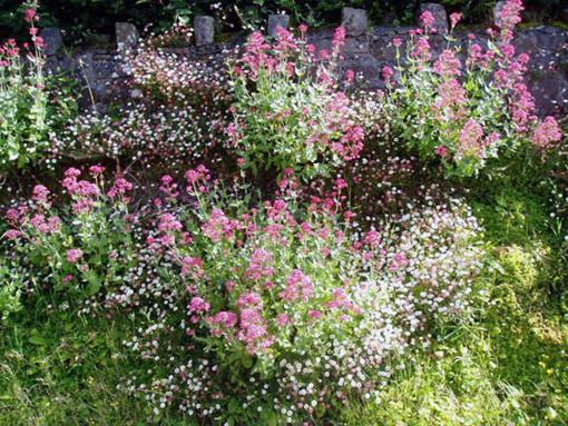 pretty summer daisies St John's Wood