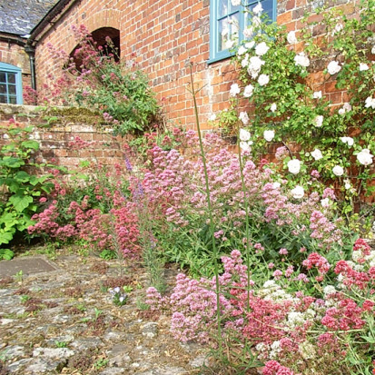 centranthus pink and white planting design wiltshire