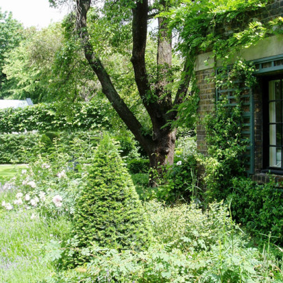 green shady garden with topiary london